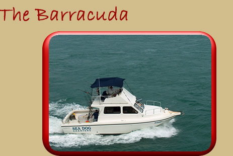 Sea dog charter 39 s sportfishing boats and prices marathon for Plenty of fish cost
